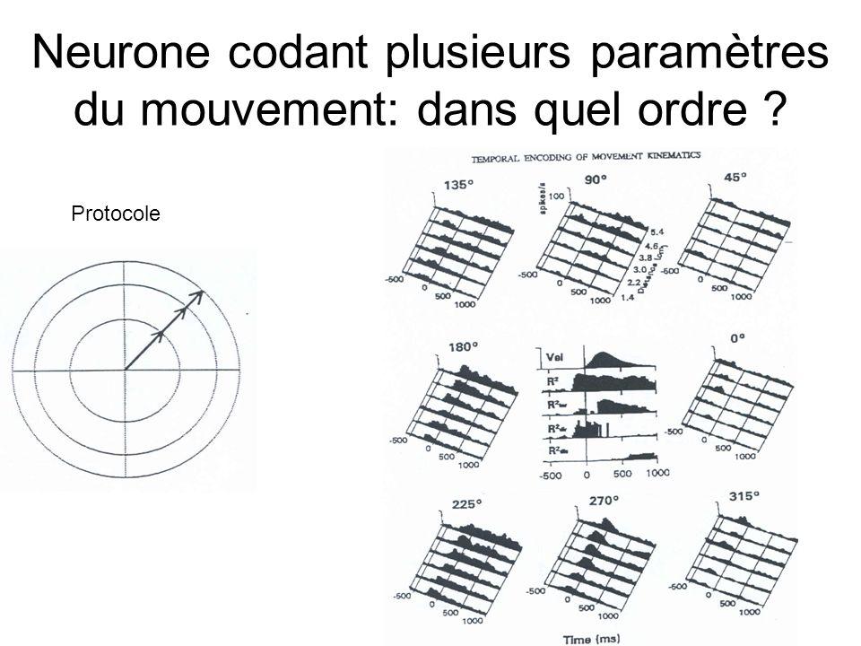 Neurone codant plusieurs paramètres du mouvement: dans quel ordre