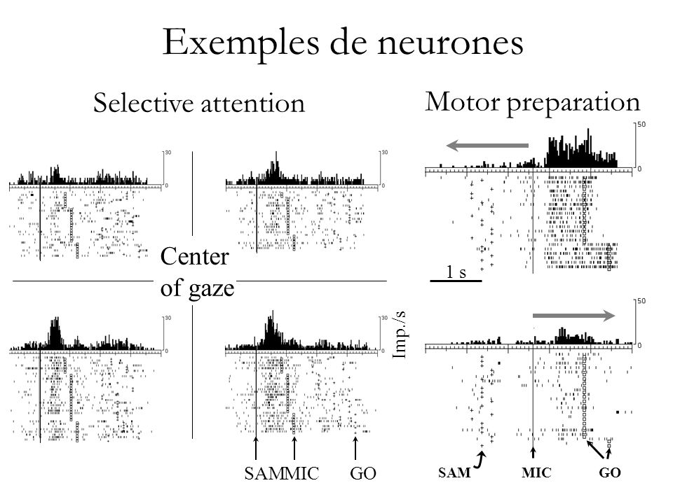 Exemples de neurones Selective attention Motor preparation Center