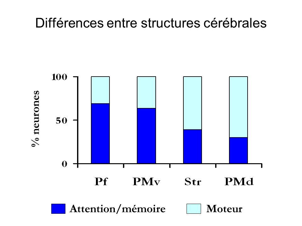 Différences entre structures cérébrales
