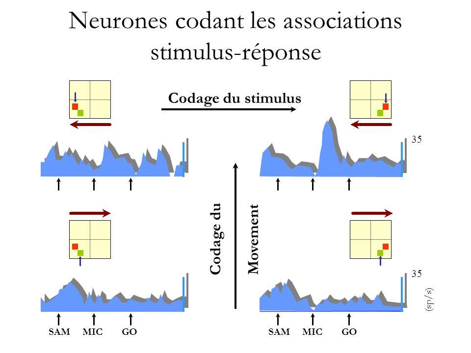 Neurones codant les associations stimulus-réponse