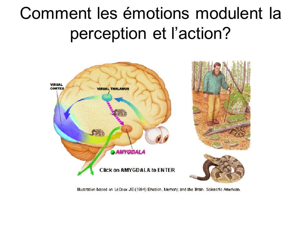 Comment les émotions modulent la perception et l'action