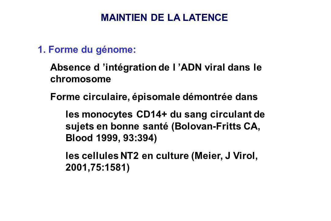 MAINTIEN DE LA LATENCE 1. Forme du génome: Absence d 'intégration de l 'ADN viral dans le chromosome.