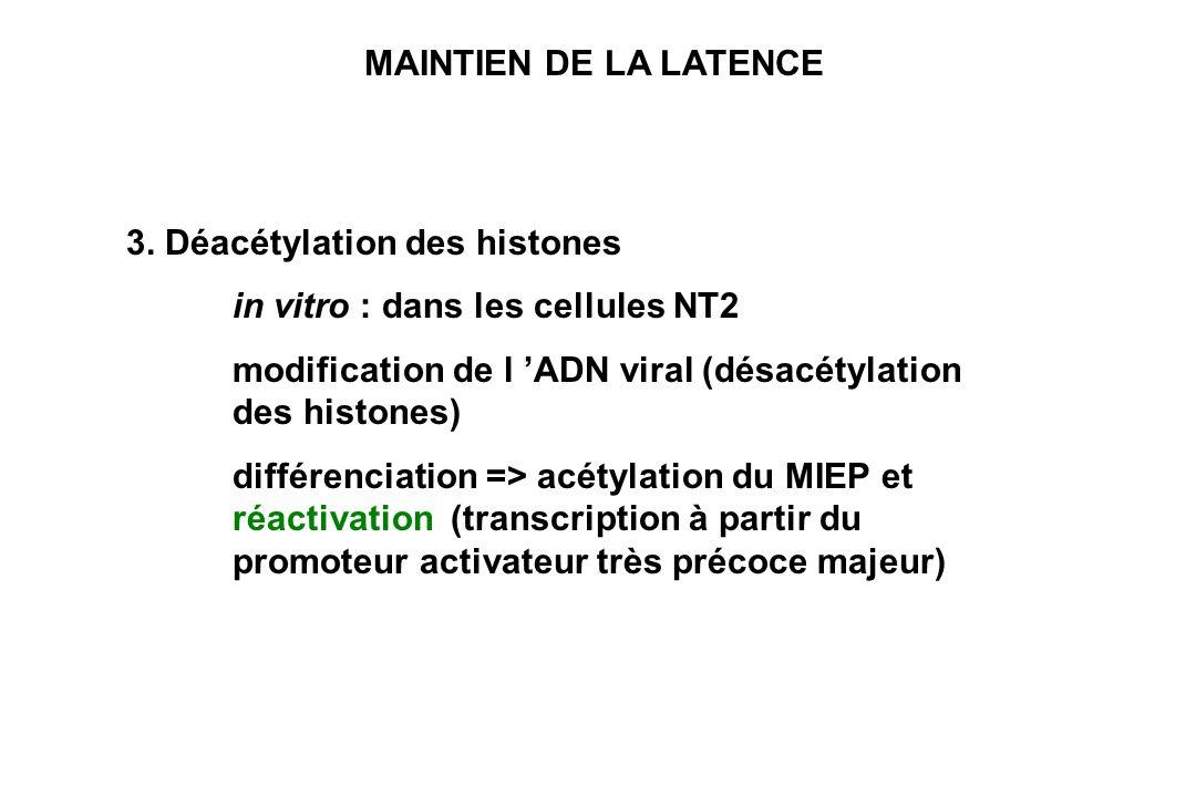 MAINTIEN DE LA LATENCE 3. Déacétylation des histones. in vitro : dans les cellules NT2. modification de l 'ADN viral (désacétylation des histones)