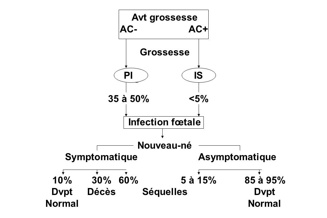Avt grossesse AC- AC+ Grossesse. PI IS. 35 à 50% <5% Infection fœtale. Nouveau-né. Symptomatique Asymptomatique.