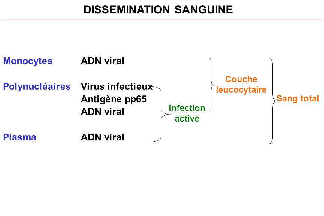 DISSEMINATION SANGUINE