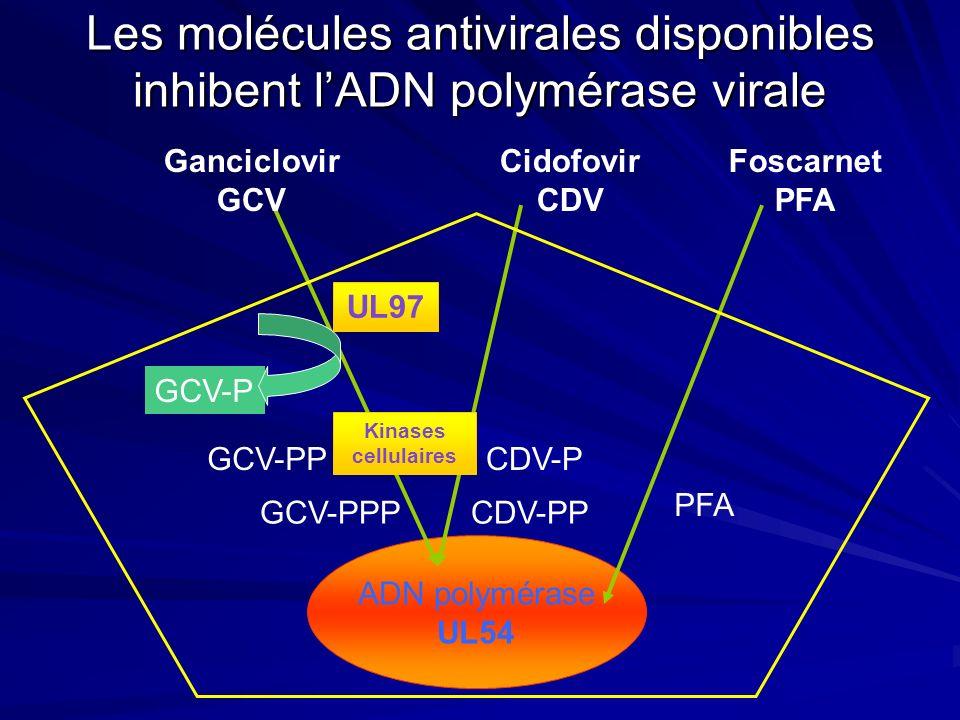 Les molécules antivirales disponibles inhibent l'ADN polymérase virale