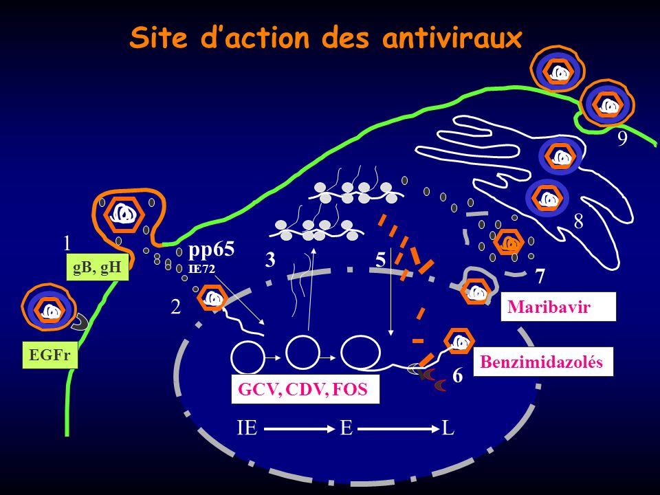 Site d'action des antiviraux