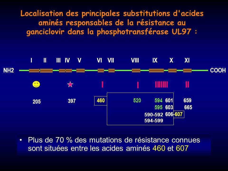 Localisation des principales substitutions d acides aminés responsables de la résistance au ganciclovir dans la phosphotransférase UL97 :