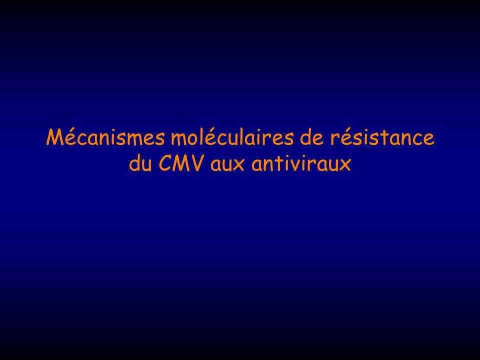 Mécanismes moléculaires de résistance du CMV aux antiviraux
