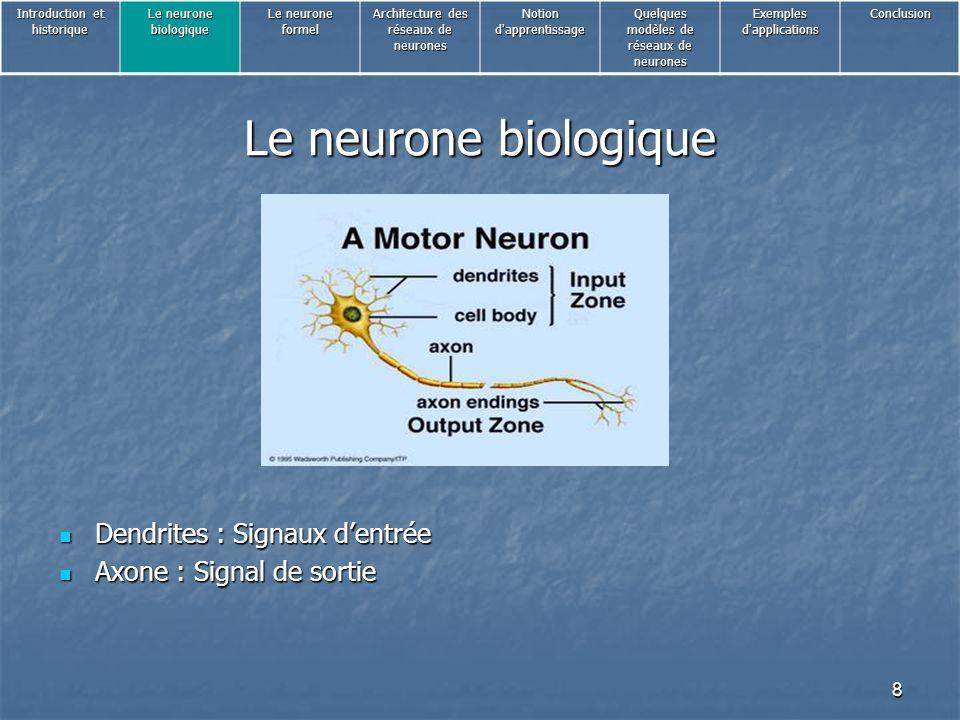 Le neurone biologique Dendrites : Signaux d'entrée