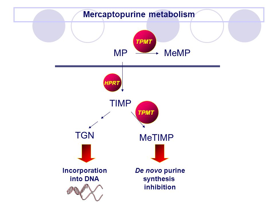 Mercaptopurine metabolism