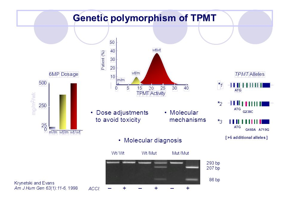 Genetic polymorphism of TPMT