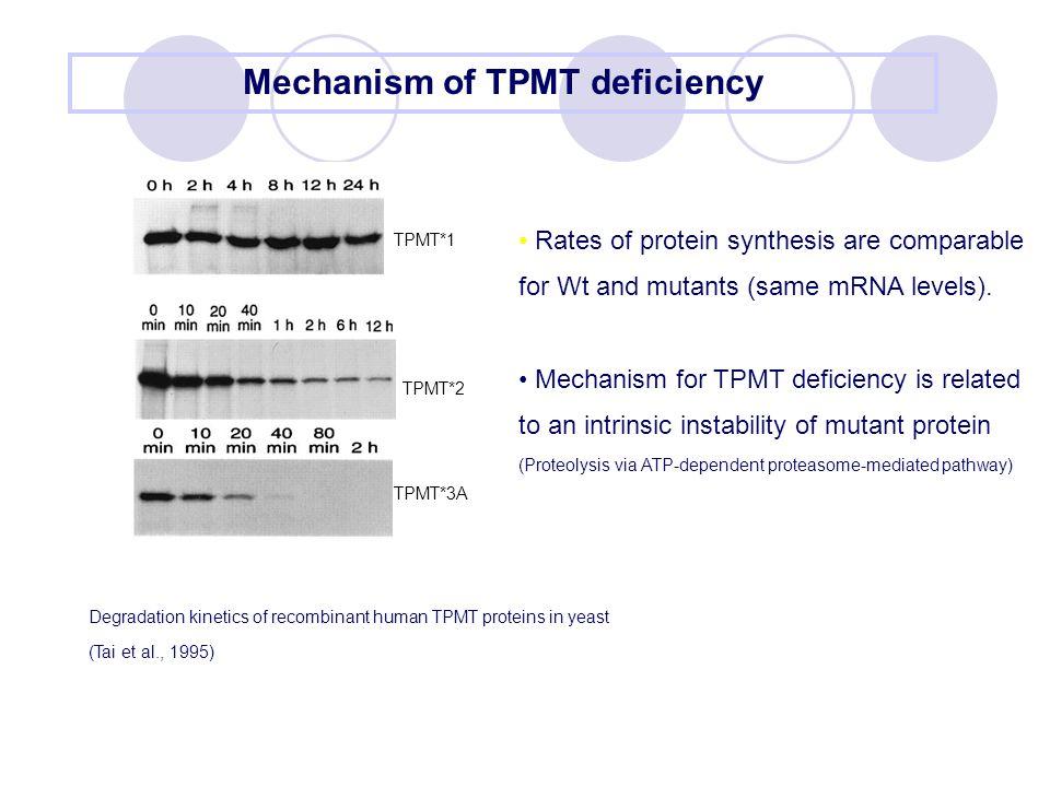 Mechanism of TPMT deficiency