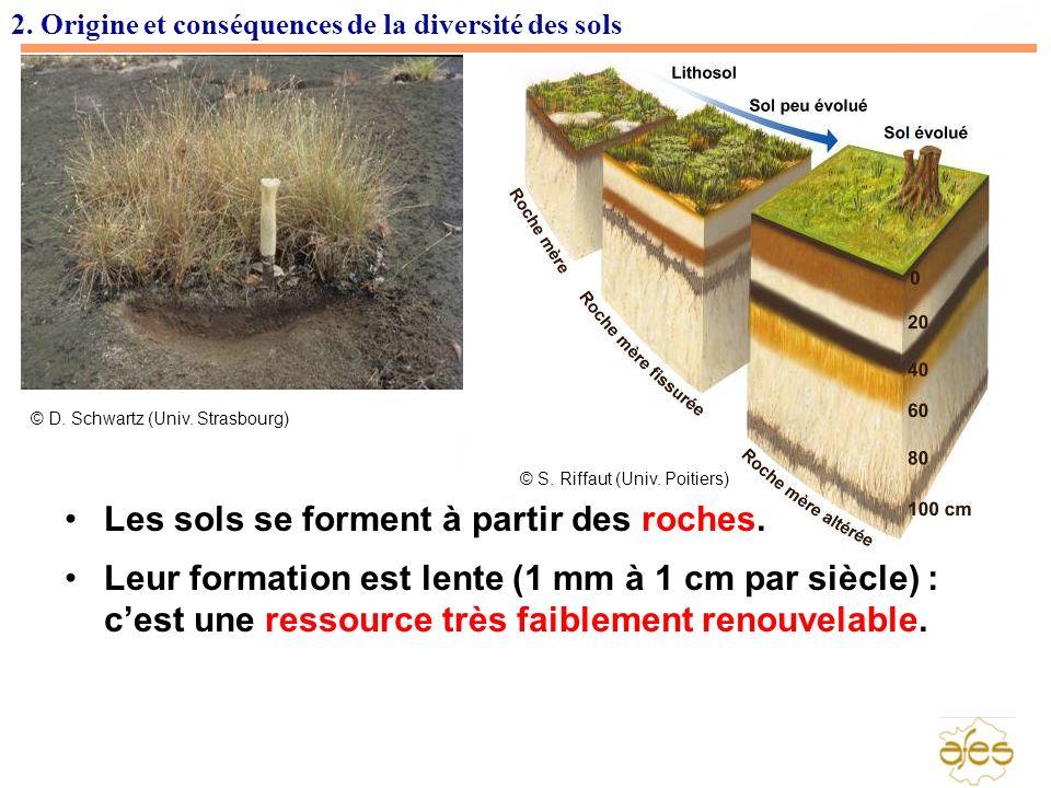 Les sols se forment à partir des roches.