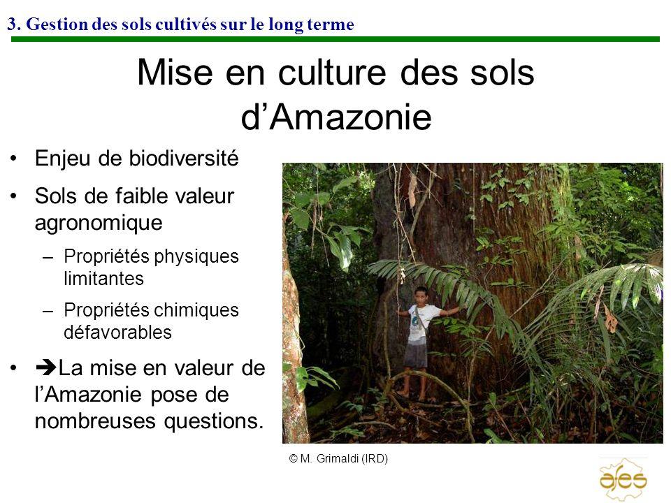Mise en culture des sols d'Amazonie