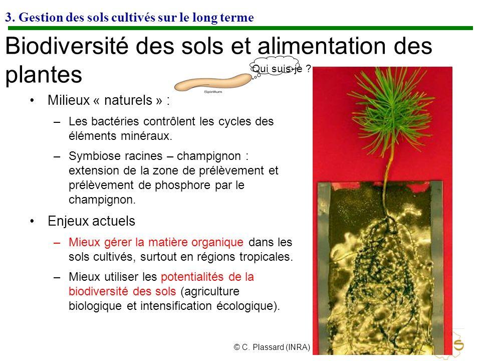 Biodiversité des sols et alimentation des plantes