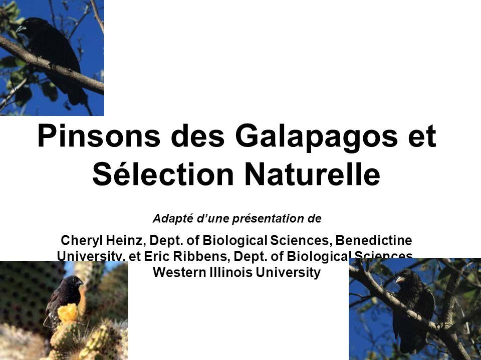 Pinsons des Galapagos et Sélection Naturelle