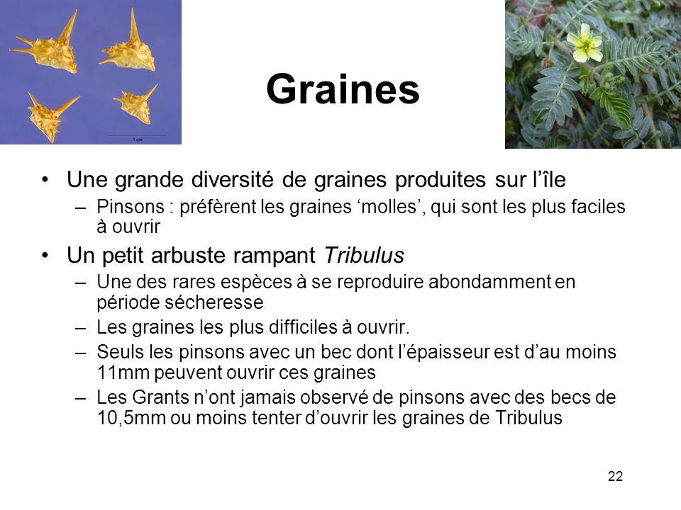 Graines Une grande diversité de graines produites sur l'île