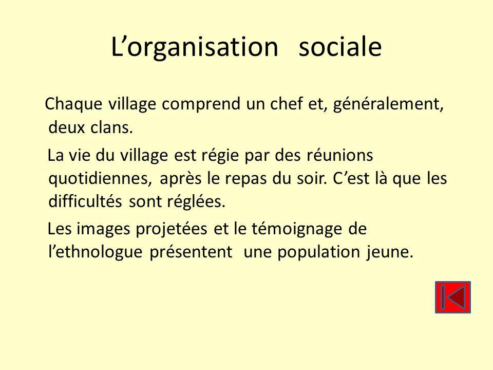 L'organisation sociale