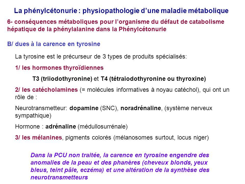 La phénylcétonurie : physiopathologie d'une maladie métabolique