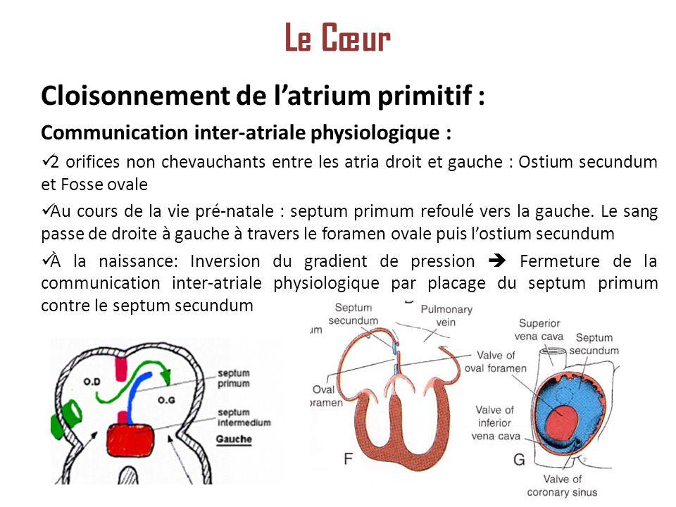 Le Cœur Cloisonnement de l'atrium primitif :