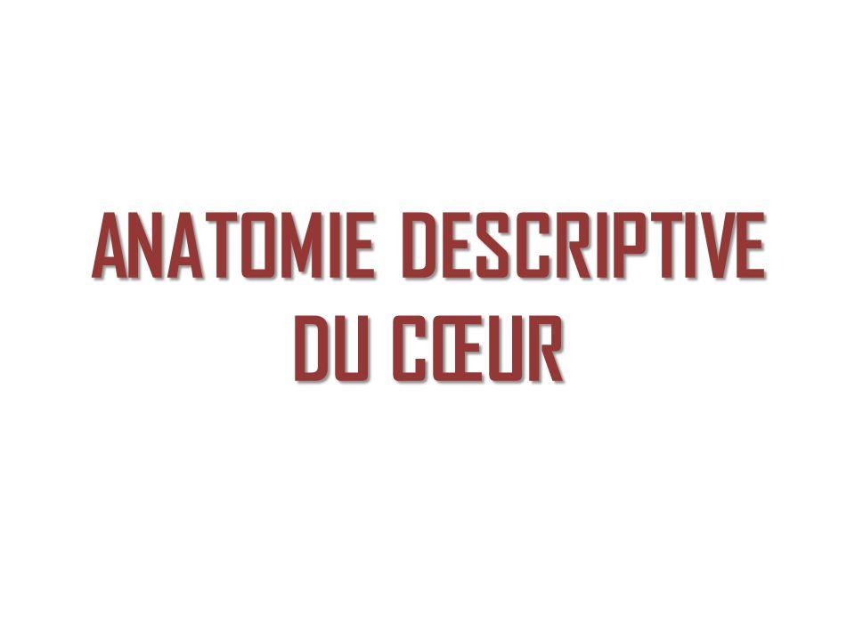 ANATOMIE DESCRIPTIVE DU CŒUR