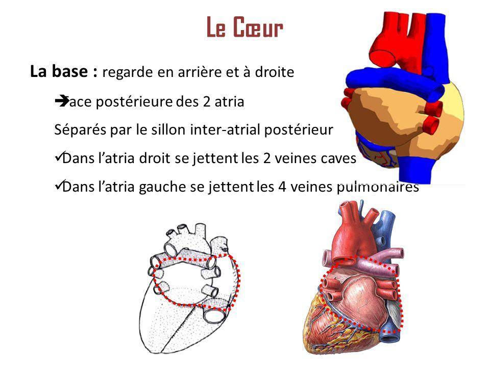 Le Cœur La base : regarde en arrière et à droite