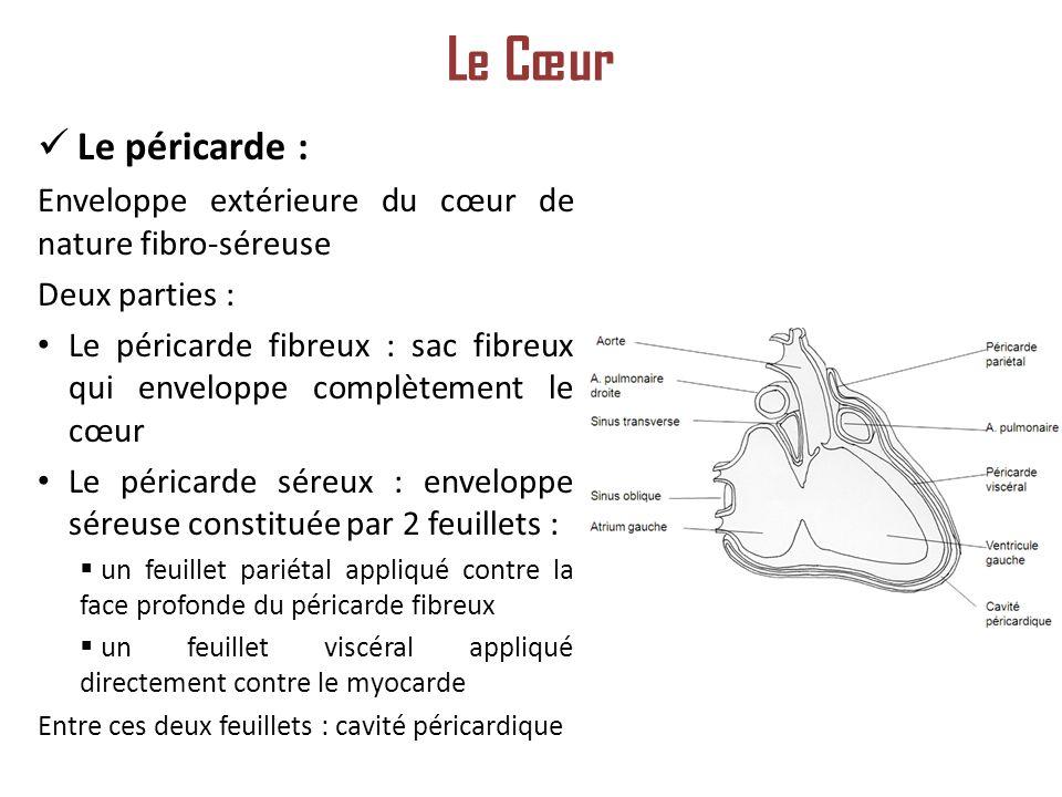 Le Cœur Le péricarde : Enveloppe extérieure du cœur de nature fibro-séreuse. Deux parties :