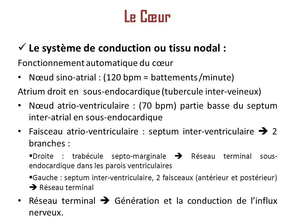 Le Cœur Le système de conduction ou tissu nodal :