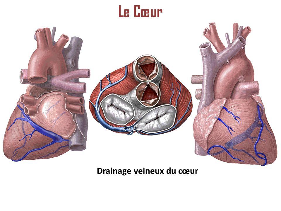 Drainage veineux du cœur