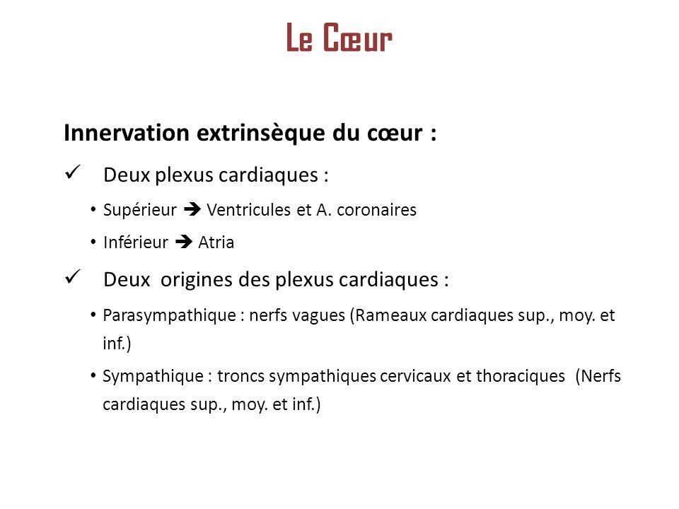Le Cœur Innervation extrinsèque du cœur : Deux plexus cardiaques :