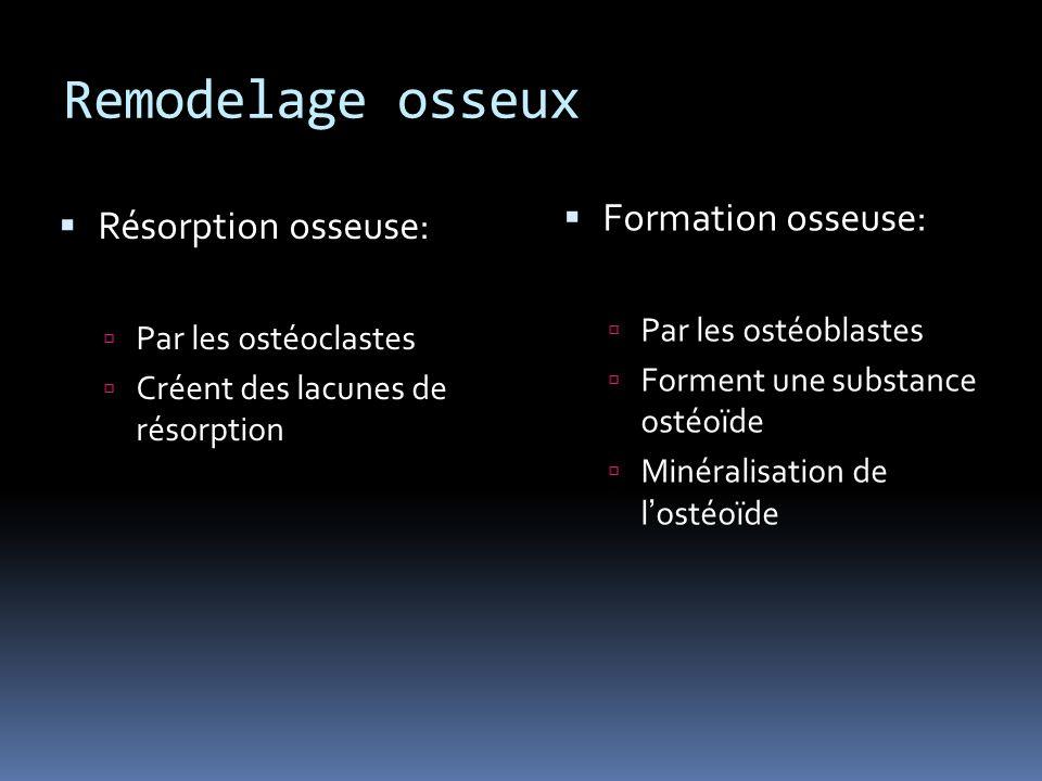 Remodelage osseux Formation osseuse: Résorption osseuse: