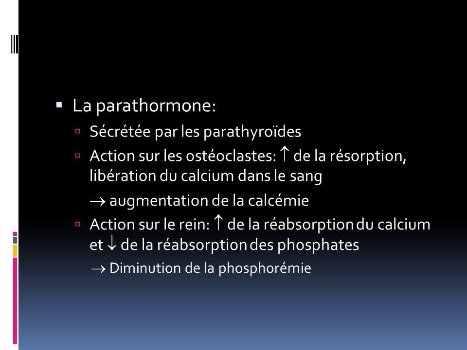La parathormone: Sécrétée par les parathyroïdes