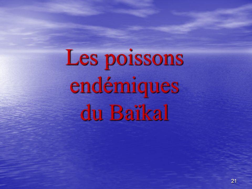 Les poissons endémiques du Baïkal