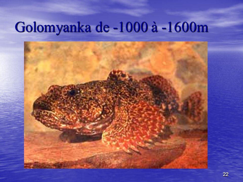 Golomyanka de -1000 à -1600m
