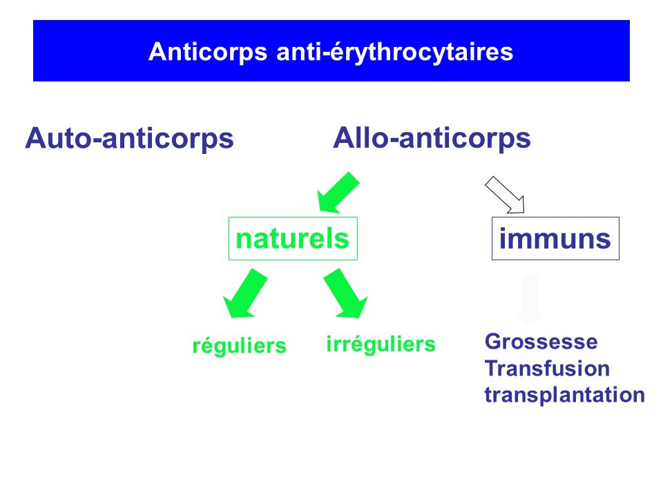 Anticorps anti-érythrocytaires