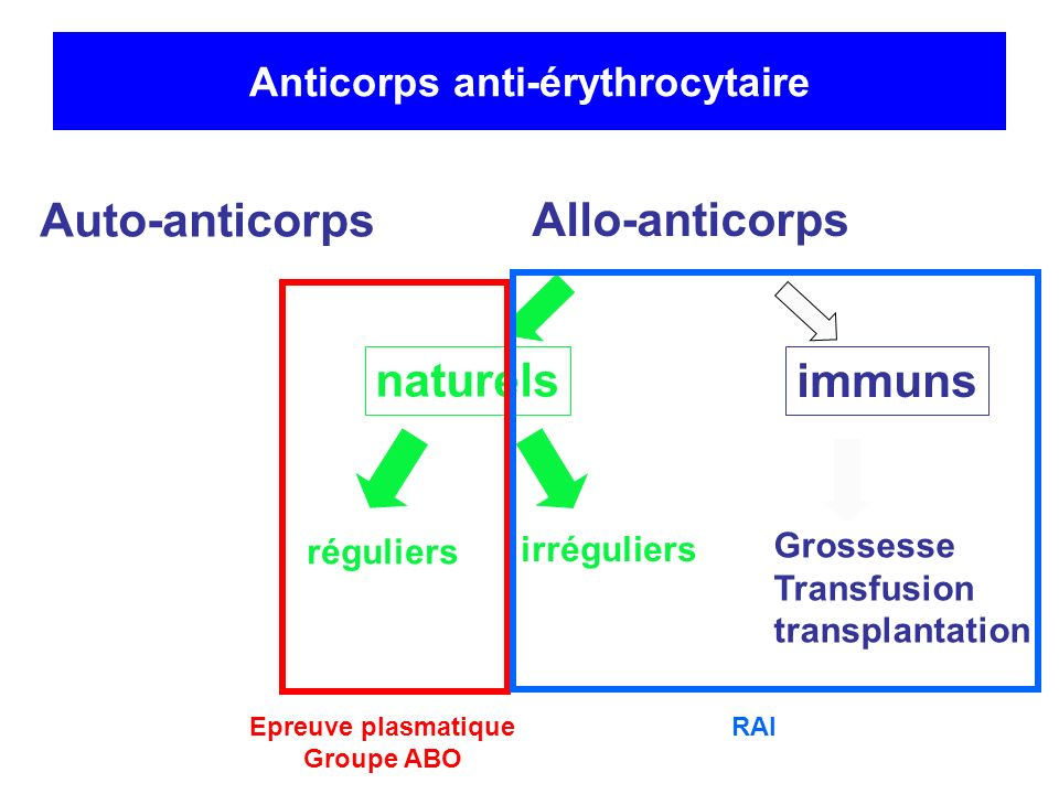 Anticorps anti-érythrocytaire