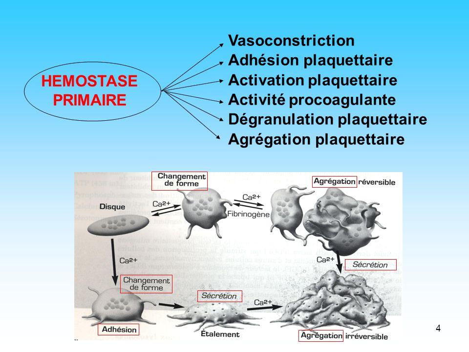 Vasoconstriction Adhésion plaquettaire. Activation plaquettaire. Activité procoagulante. Dégranulation plaquettaire.