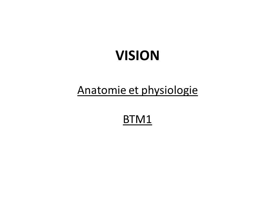 VISION Anatomie et physiologie BTM1
