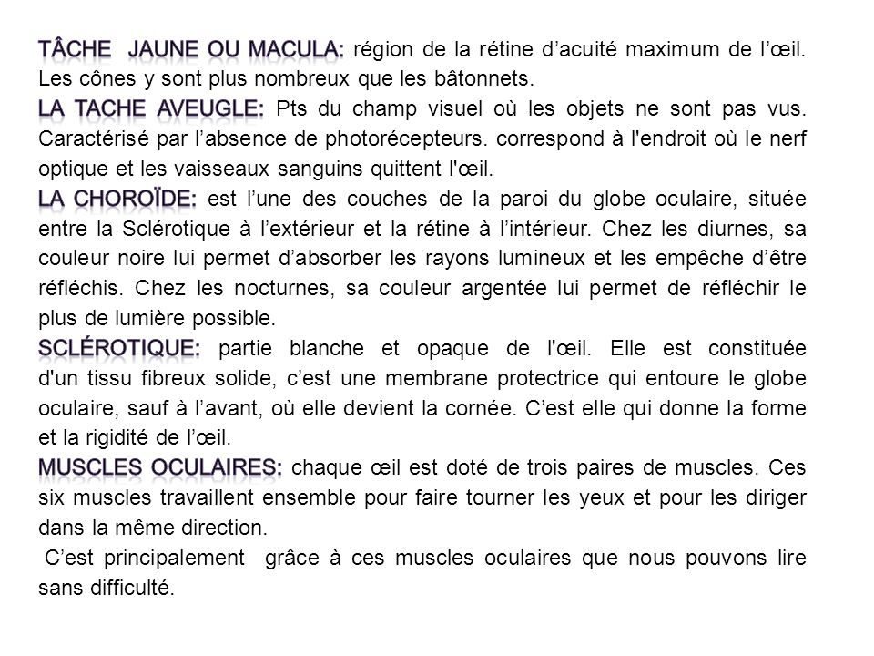 Vision anatomie et physiologie btm1 ppt video online t l charger - Couche du globe oculaire ...