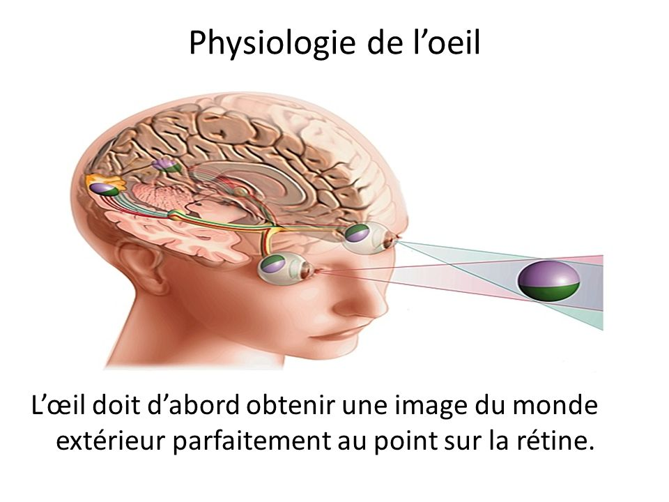 Physiologie de l'oeil L'œil doit d'abord obtenir une image du monde extérieur parfaitement au point sur la rétine.