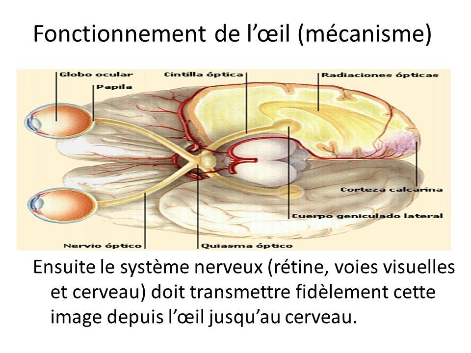 Fonctionnement de l'œil (mécanisme)