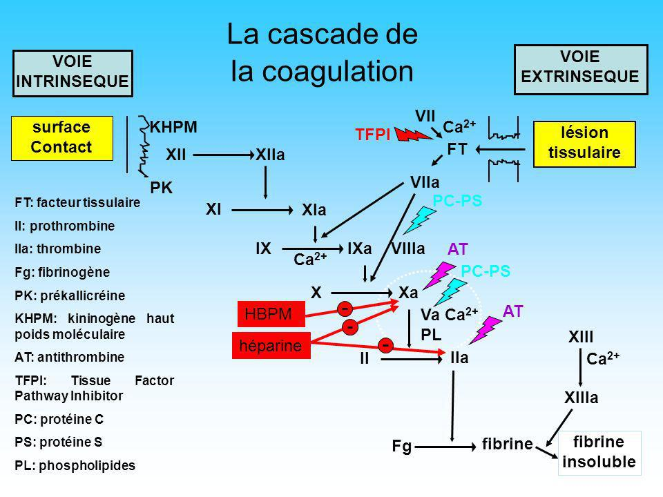 La cascade de la coagulation VOIE EXTRINSEQUE VOIE INTRINSEQUE VII