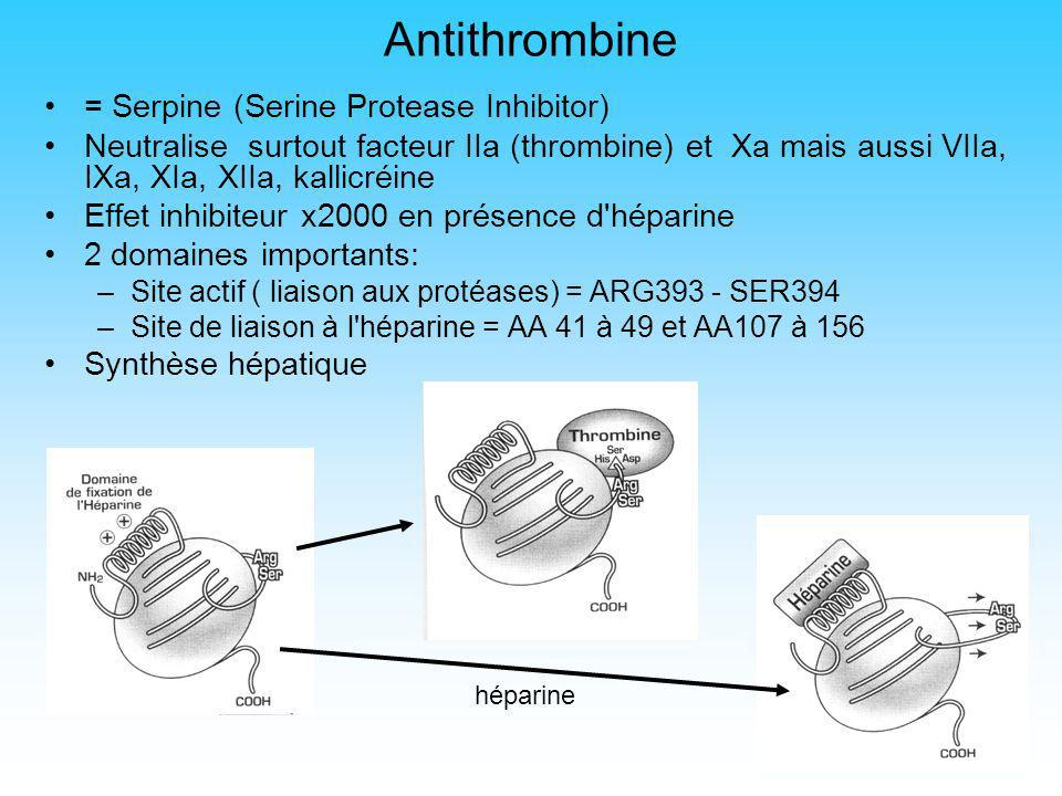 Antithrombine = Serpine (Serine Protease Inhibitor)