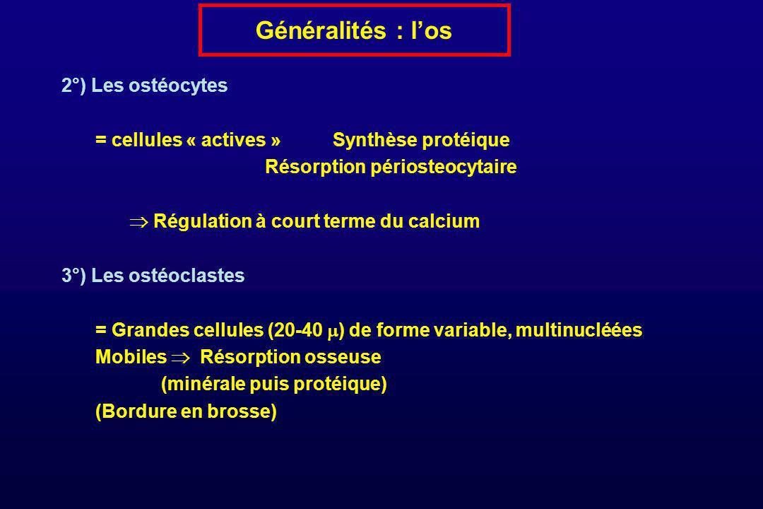 Généralités : l'os 2°) Les ostéocytes