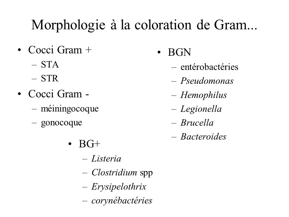 Morphologie à la coloration de Gram...