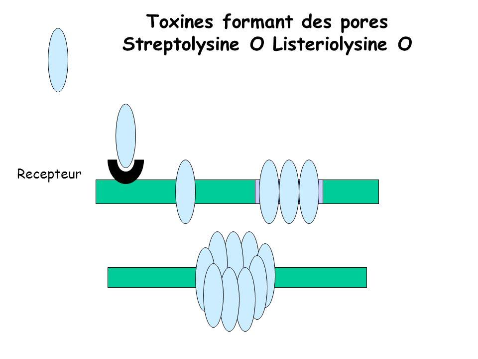 Toxines formant des pores Streptolysine O Listeriolysine O