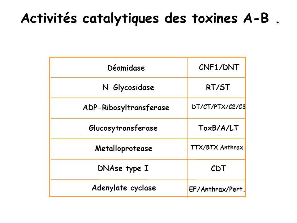 Activités catalytiques des toxines A-B .