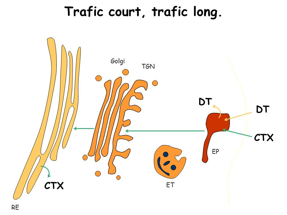 Trafic court, trafic long.