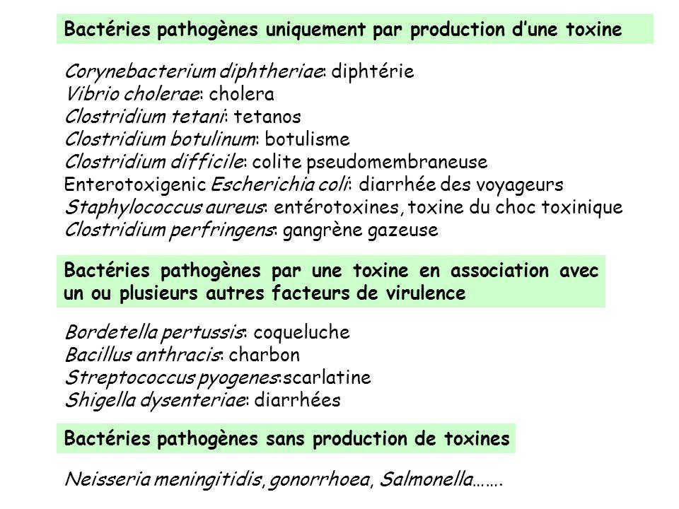 Bactéries pathogènes uniquement par production d'une toxine